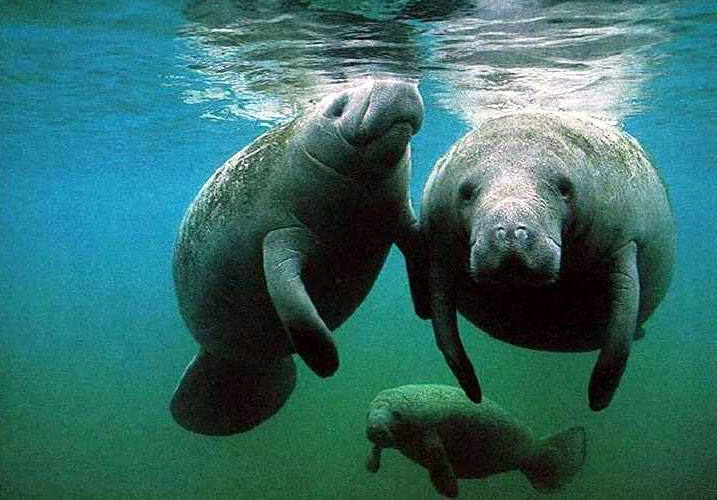 You and Me and a Manatee - Personalized Music for Children