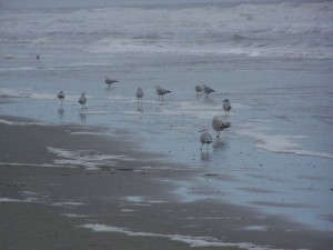 flock of seagulls at the beach